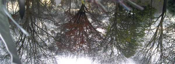 Untitled (trees, hanger)