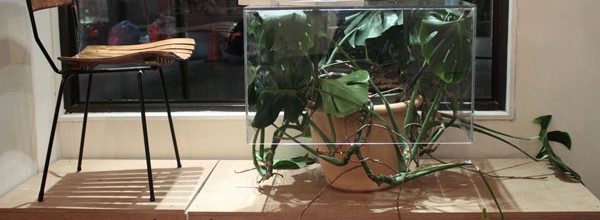 Untitled (plant table)